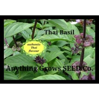Herb - Basil - Thai, Asian - Organic